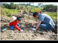 深圳农耕亲子体验田园寻宝活动项目—挖马蹄